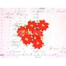 Пуансетия, красная (5 шт)