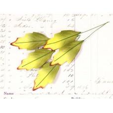 Листья остролиста, зеленые желтым (5 шт)