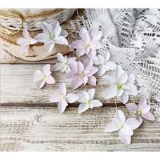 Набор цветов Гортензии дуболистные, бело-розовые